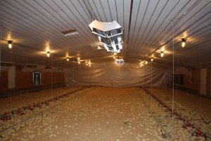 Poultry Amp Swine Heating Space Ray